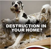 Destruction In Your Home