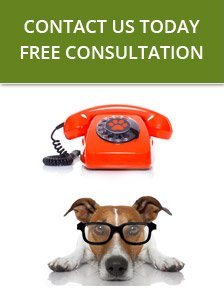 Contact K9 Advisors - Free Consultation
