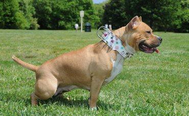 K9 ADVISORS Dog Training - K9 ADVISORS