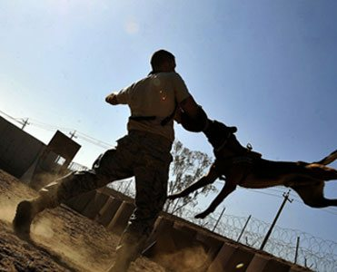 Protection K9 training